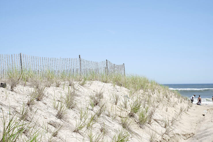 a beach in Montauk with plants poking out of the sand.